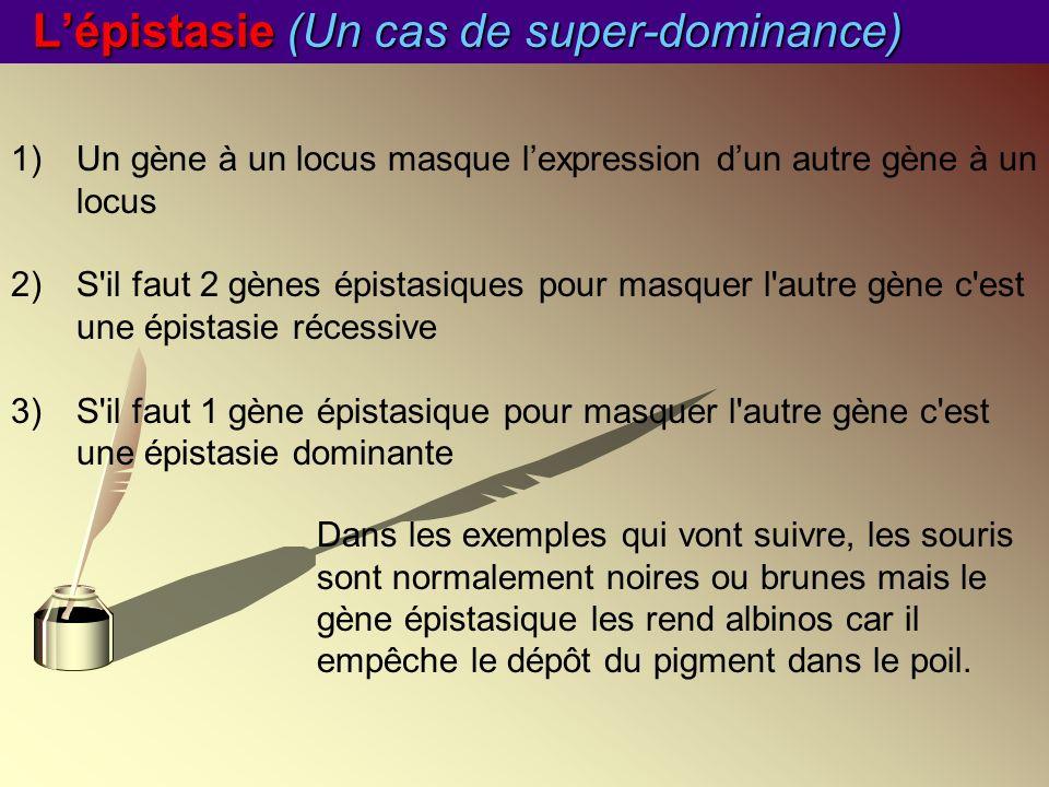 Lépistasie (Un cas de super-dominance) 1)Un gène à un locus masque lexpression dun autre gène à un locus 2)S'il faut 2 gènes épistasiques pour masquer