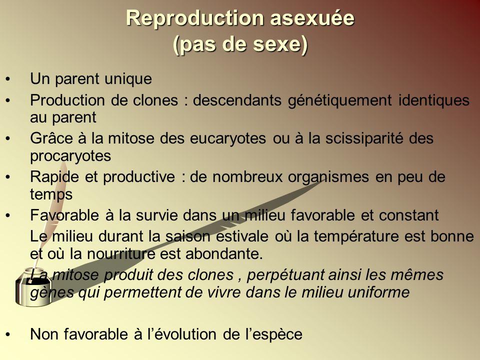 Reproduction asexuée (pas de sexe) Un parent unique Production de clones : descendants génétiquement identiques au parent Grâce à la mitose des eucary