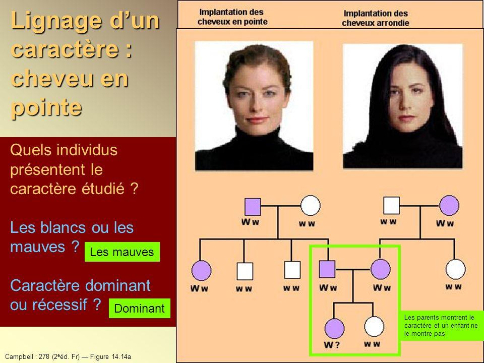 Lignage dun caractère : cheveu en pointe Quels individus présentent le caractère étudié ? Les blancs ou les mauves ? Caractère dominant ou récessif ?