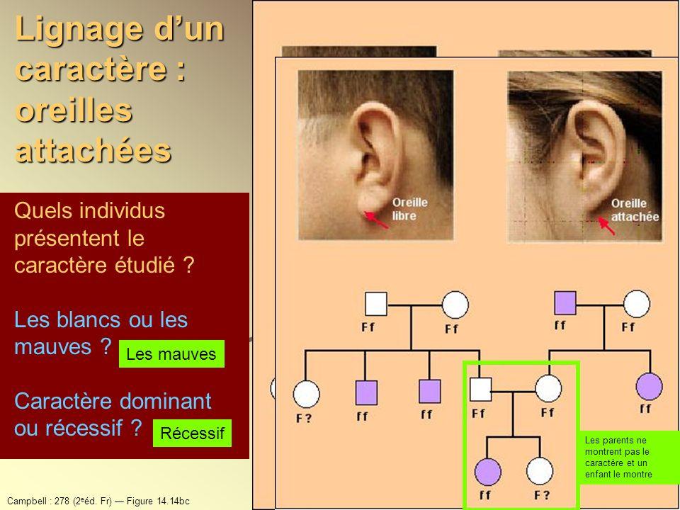 Quels individus présentent le caractère étudié ? Les blancs ou les mauves ? Caractère dominant ou récessif ? Les mauves Récessif Lignage dun caractère