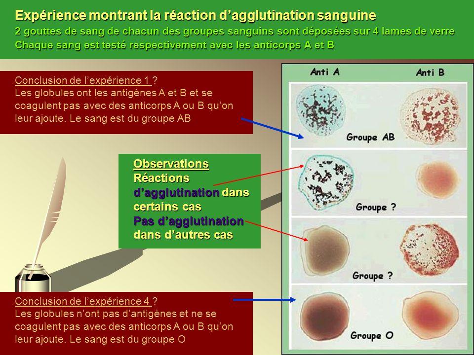 Expérience montrant la réaction dagglutination sanguine 2 gouttes de sang de chacun des groupes sanguins sont déposées sur 4 lames de verre Chaque san