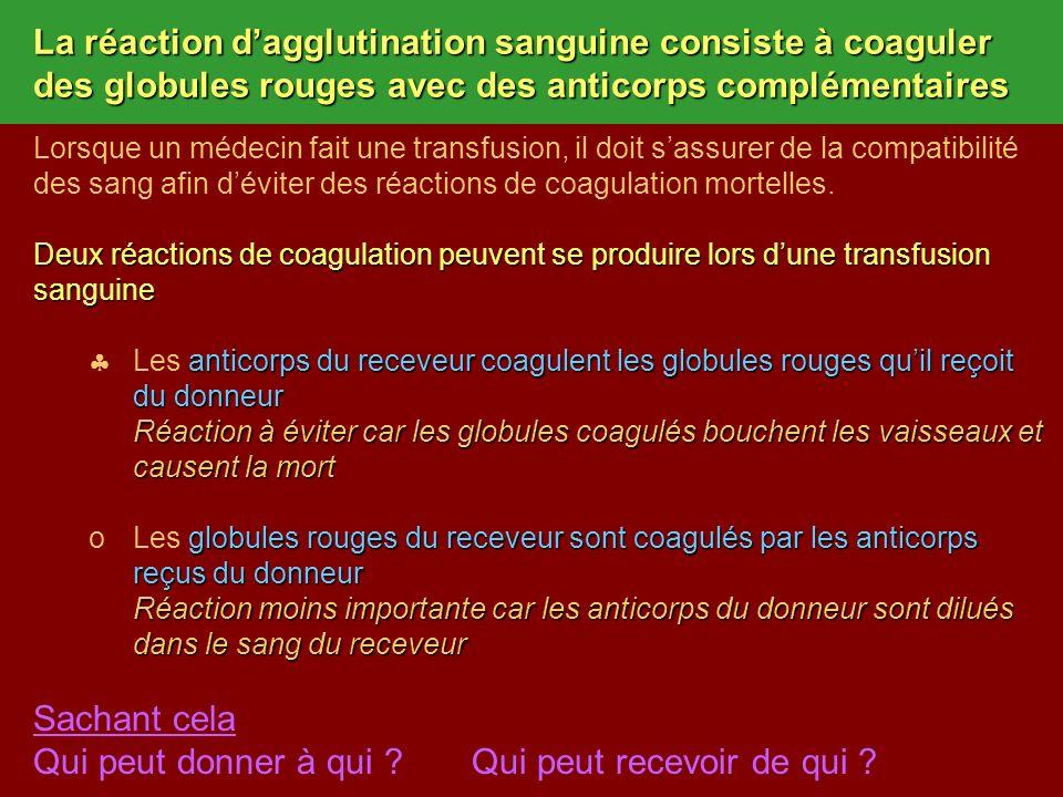 La réaction dagglutination sanguine consiste à coaguler des globules rouges avec des anticorps complémentaires Lorsque un médecin fait une transfusion