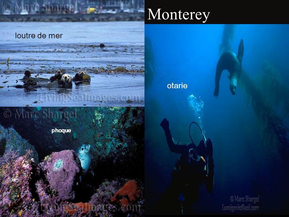 Mammifères de Point Lobos