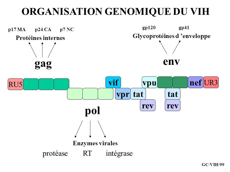 ORGANISATION GENOMIQUE DU VIH RU5 vif tatvpr nefvpu rev tat UR3 rev gag env pol protéaseRTintégrase p17 MAp24 CAp7 NC gp120gp41 Protéines internes Enz
