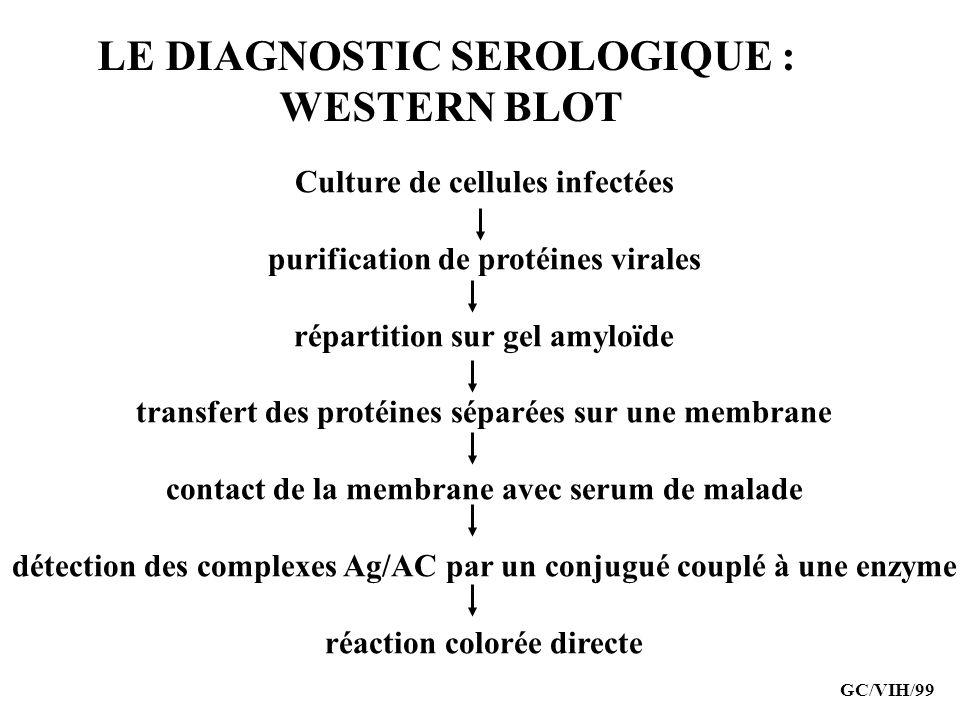 LE DIAGNOSTIC SEROLOGIQUE : WESTERN BLOT Culture de cellules infectées purification de protéines virales répartition sur gel amyloïde transfert des pr