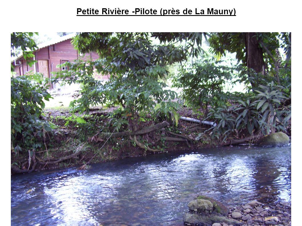 Petite Rivière -Pilote (près de La Mauny)