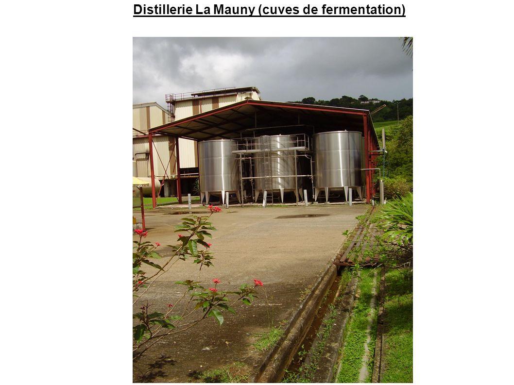 Distillerie La Mauny (cuves de fermentation)