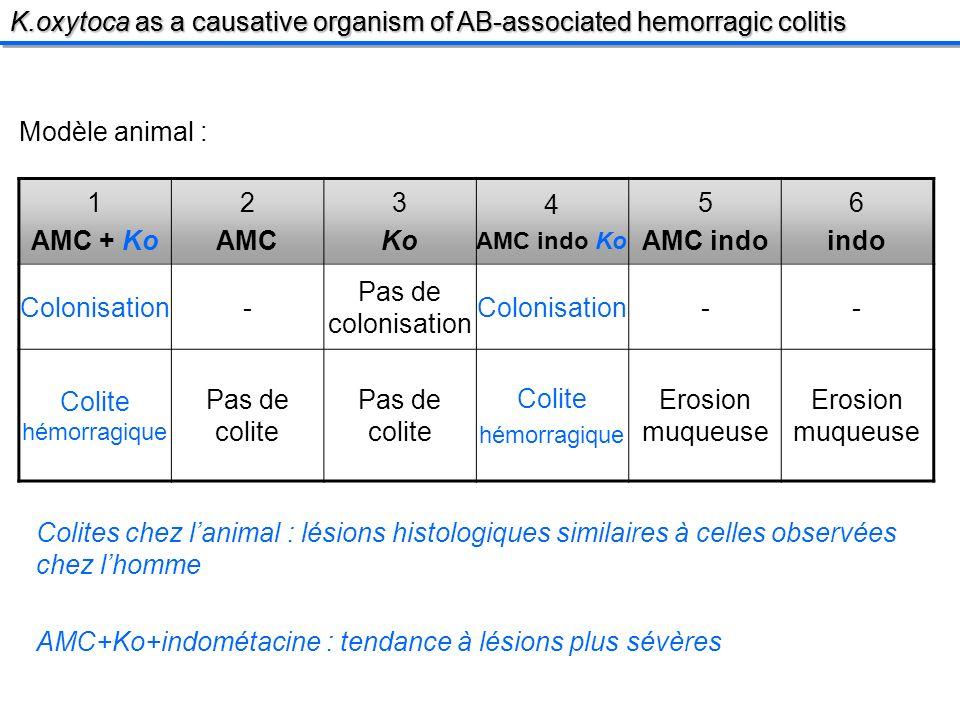 Modèle animal : 1 AMC + Ko 2 AMC 3 Ko 4 AMC indo Ko 5 AMC indo 6 indo Colonisation- Pas de colonisation Colonisation-- Colite hémorragique Pas de colite Colite hémorragique Erosion muqueuse Colites chez lanimal : lésions histologiques similaires à celles observées chez lhomme AMC+Ko+indométacine : tendance à lésions plus sévères K.oxytoca as a causative organism of AB-associated hemorragic colitis