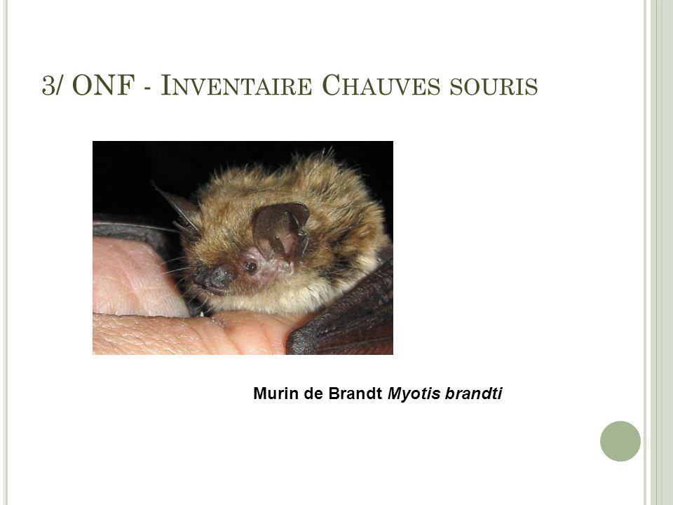 3/ ONF - I NVENTAIRE C HAUVES SOURIS Murin de Brandt Myotis brandti