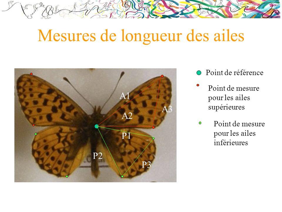 Mesures de longueur des ailes Point de référence Point de mesure pour les ailes supérieures Point de mesure pour les ailes inférieures A2 A3 A1 P3 P1