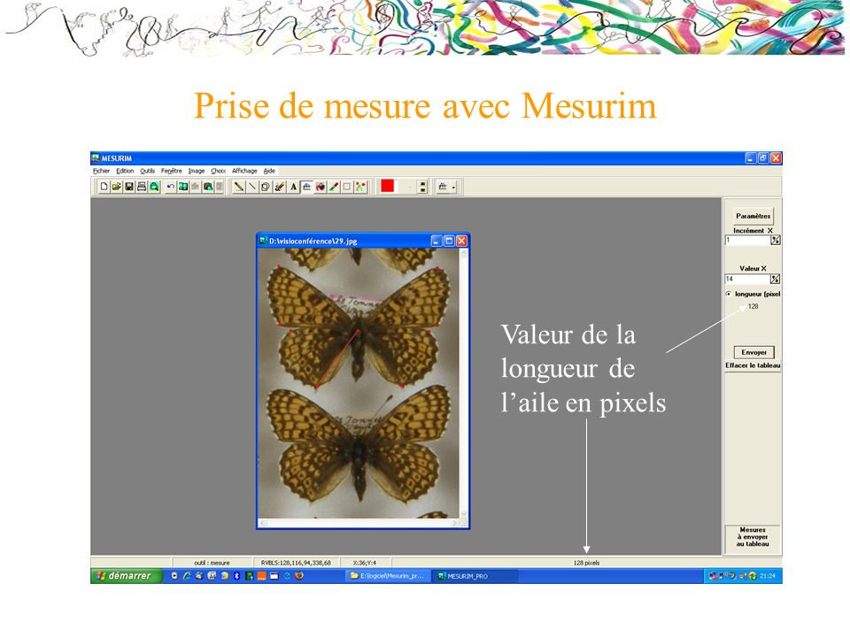 Prise de mesure avec Mesurim Valeur de la longueur de laile en pixels
