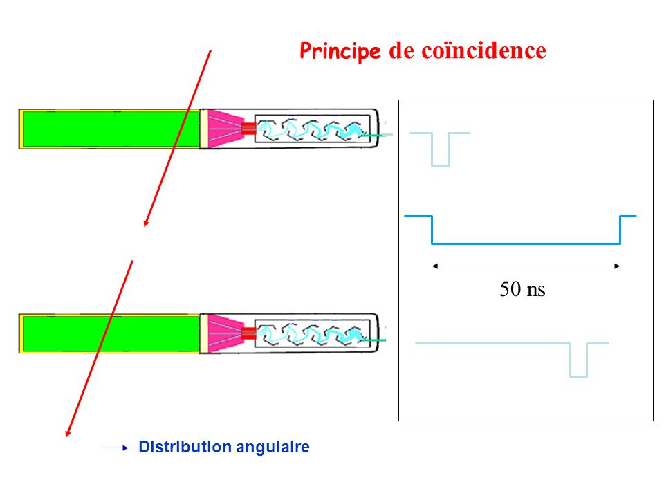 Principe de coïncidence 50 ns Distribution angulaire