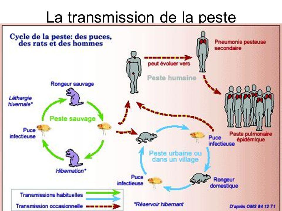 La transmission de la peste
