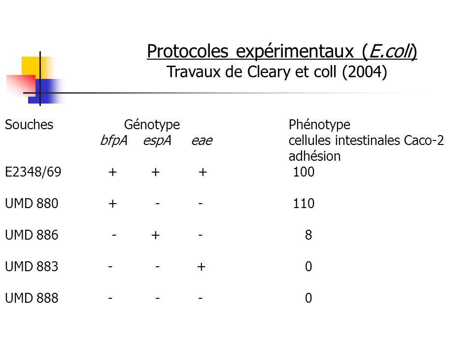 Protocoles expérimentaux (E.coli) Travaux de Cleary et coll (2004) Souches GénotypePhénotype bfpA espA eaecellules intestinales Caco-2 adhésion E2348/