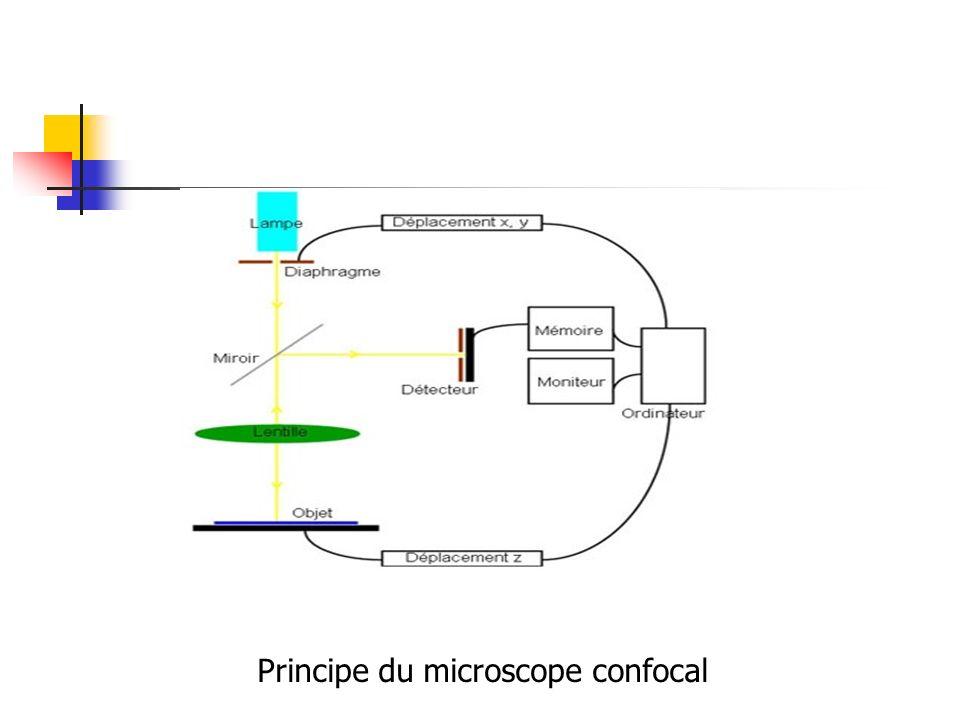 Principe du microscope confocal