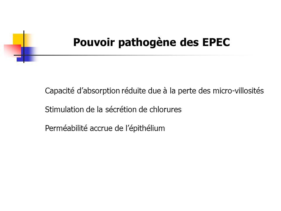 Pouvoir pathogène des EPEC Capacité dabsorption réduite due à la perte des micro-villosités Stimulation de la sécrétion de chlorures Perméabilité accr