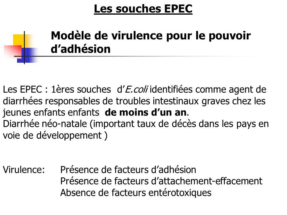 Les EPEC : 1ères souches dE.coli identifiées comme agent de diarrhées responsables de troubles intestinaux graves chez les jeunes enfants enfants de m