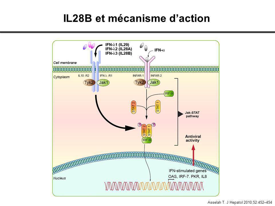 Asselah T. J Hepatol 2010;52:452–454 IL28B et mécanisme daction
