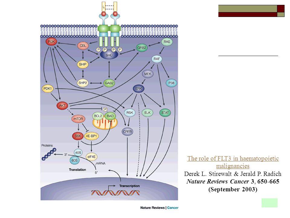 The role of FLT3 in haematopoietic malignancies Derek L. Stirewalt & Jerald P. Radich Nature Reviews Cancer 3, 650-665 (September 2003)