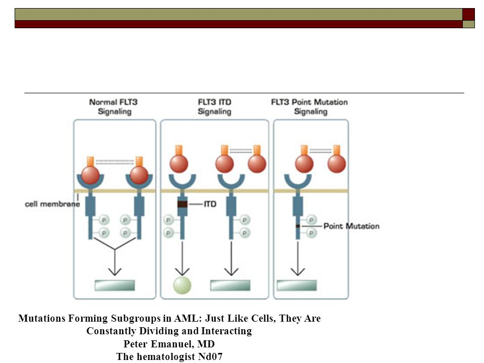Mutation intervenant sur la différenciation CBF : core binding factor : fortement exprimé dans précurseurs myélomonocytaires, et pendant la différenciation granulaire AML 1 CEBA Autres : WT 1, PU.1