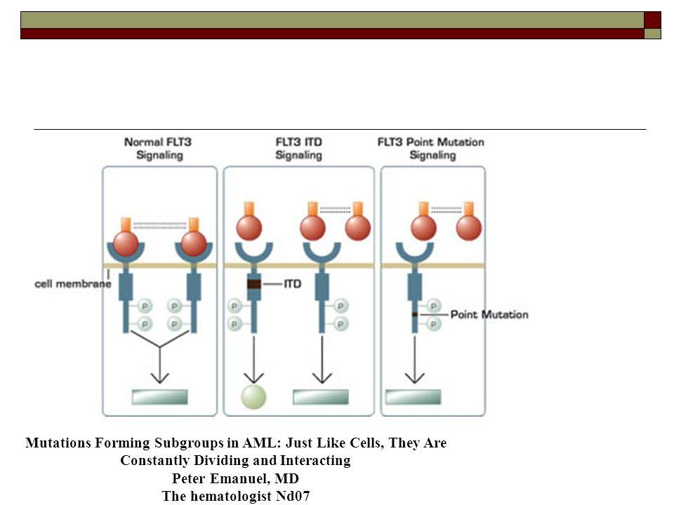 Modèle murin : Flt-3 ITD : LMMC Flt-3 TKD : anomalies lymphoïdes Jamais de LAM : fLT-3 mut non suffisant