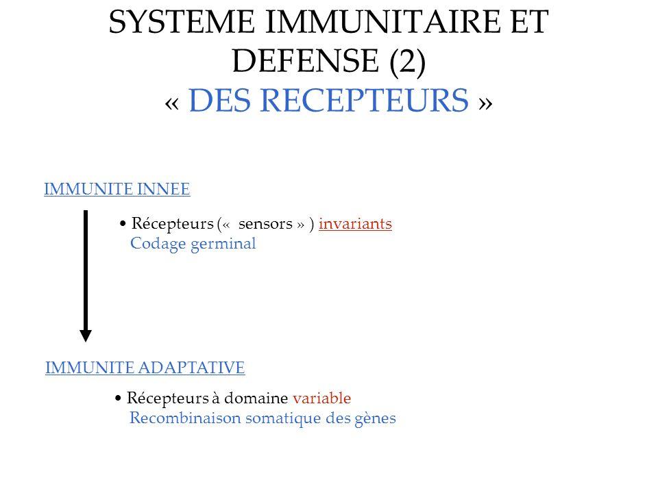 SYSTEME IMMUNITAIRE ET DEFENSE (2) « DES RECEPTEURS » IMMUNITE INNEE IMMUNITE ADAPTATIVE Récepteurs (« sensors » ) invariants Codage germinal Récepteu