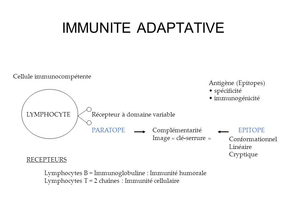 IMMUNITE ADAPTATIVE Cellule immunocompétente Récepteur à domaine variable PARATOPEComplémentarité Image « clé-serrure » EPITOPE Antigène (Epitopes) sp