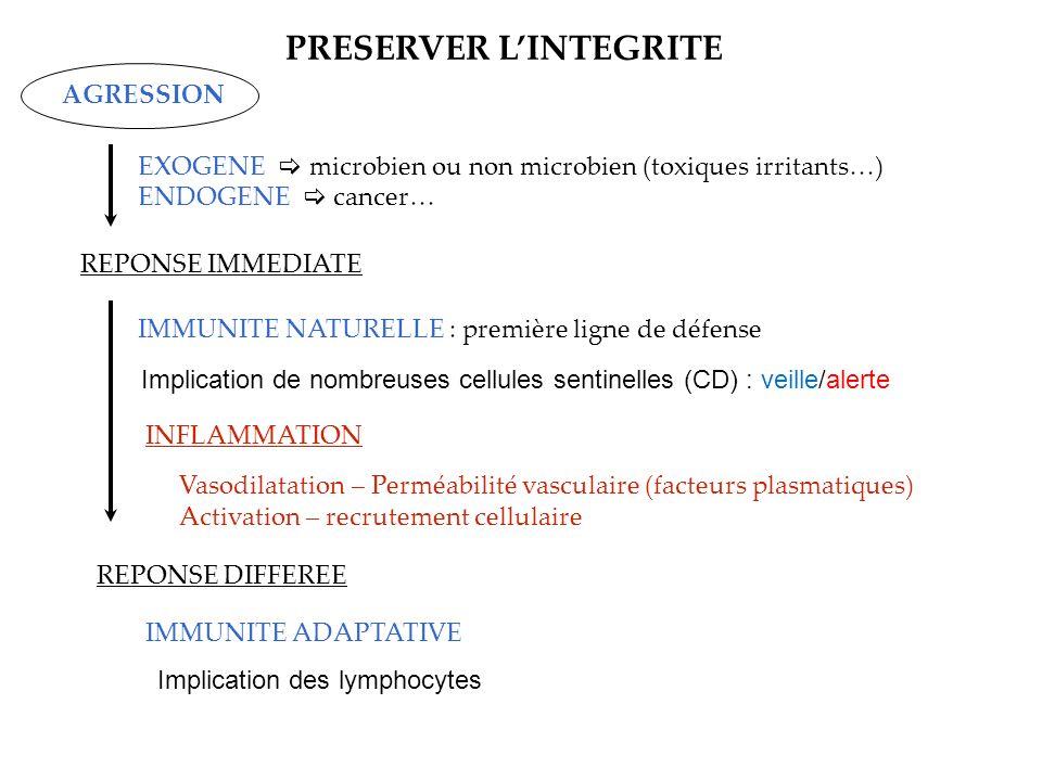 Lymphocytes (sang, lymphe, tissus lymphoïdes) Morphologie homogène mais Marqueurs membranaires Monocytes (sanguins) Macrophages (tissulaires) ¢ Dendritiques (sang, lymphe, tissus) Polynucléaires