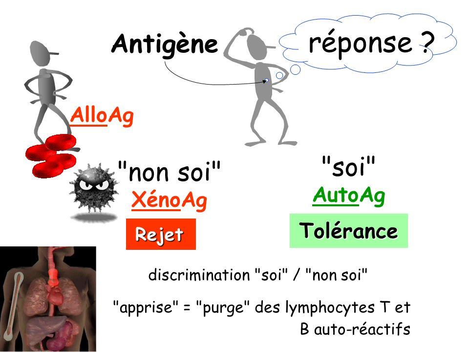 réponse ? Antigène Tolérance