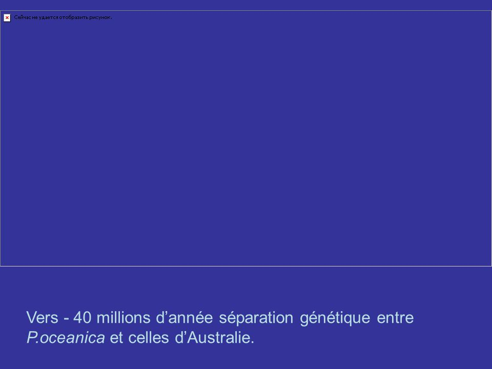 Vers - 40 millions dannée séparation génétique entre P.oceanica et celles dAustralie.