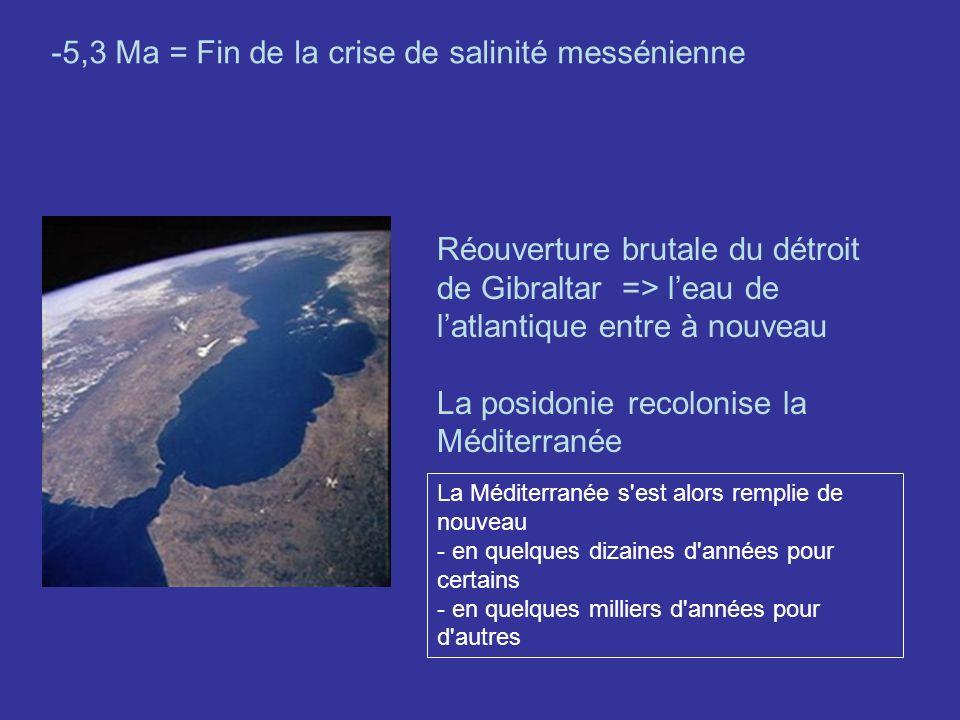 -5,3 Ma = Fin de la crise de salinité messénienne Réouverture brutale du détroit de Gibraltar => leau de latlantique entre à nouveau La posidonie reco