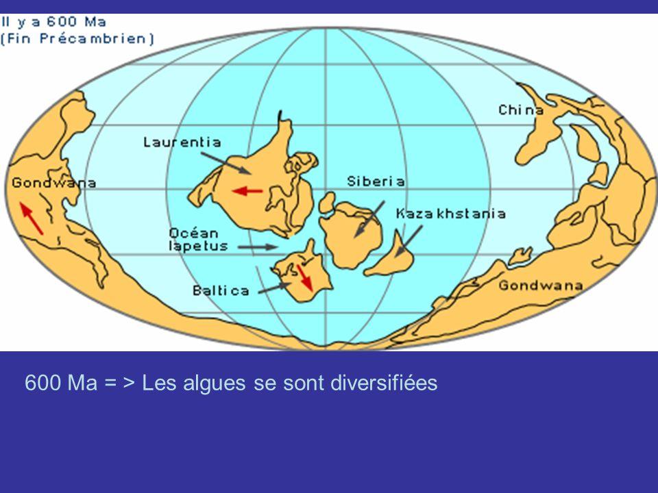 -5,9 Ma = début de la crise de salinité messénienne Fermeture de Gibraltar => La Méditerranée sest asséchée à lexception de lacs salés desservis en eau par les fleuves