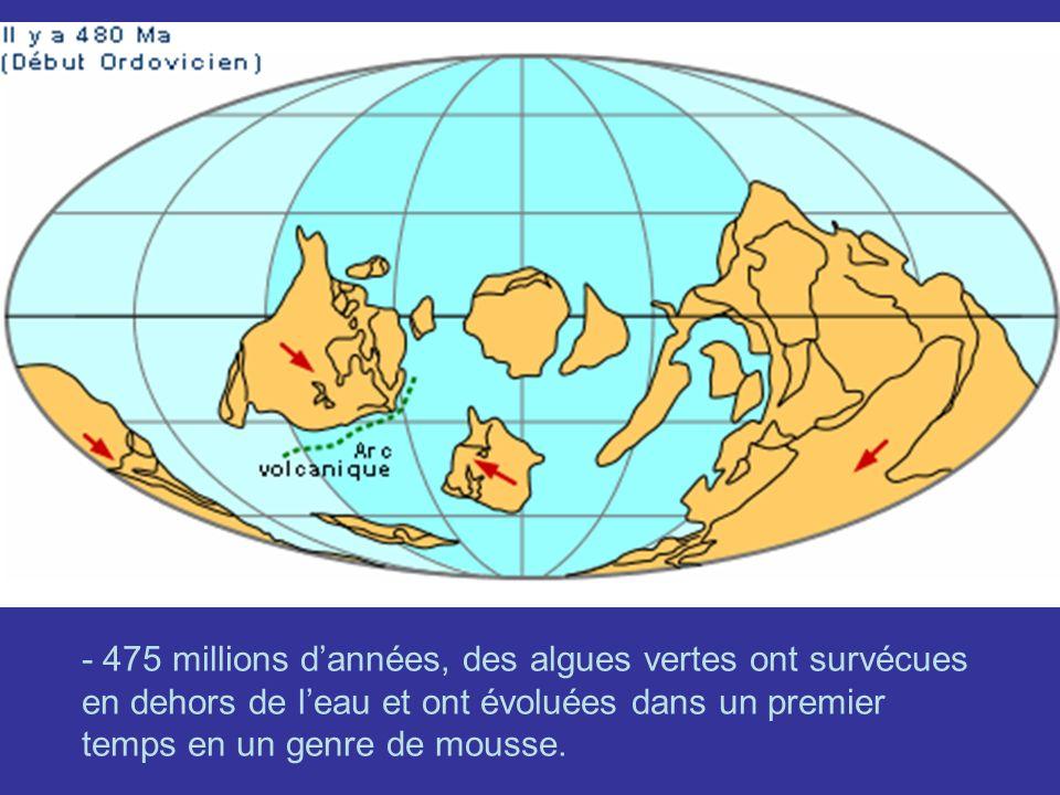- 475 millions dannées, des algues vertes ont survécues en dehors de leau et ont évoluées dans un premier temps en un genre de mousse.