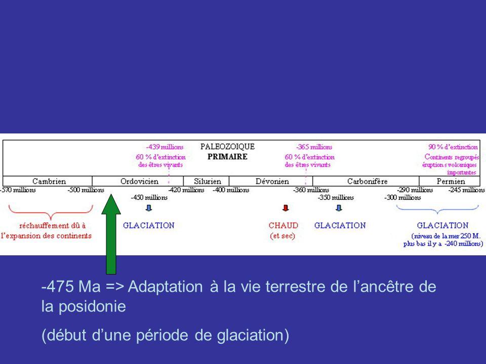 -475 Ma => Adaptation à la vie terrestre de lancêtre de la posidonie (début dune période de glaciation)