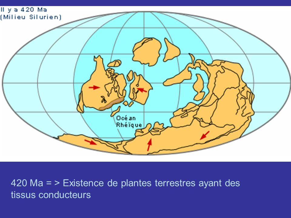 420 Ma = > Existence de plantes terrestres ayant des tissus conducteurs