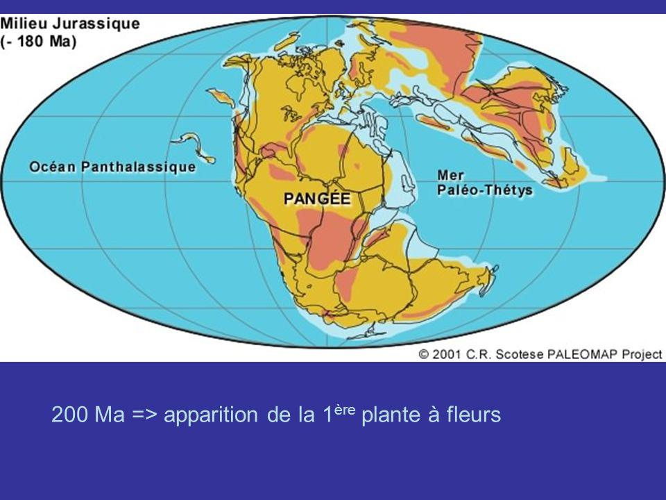 140 Ma = > Apparition des 4 groupes de plantes à fleurs