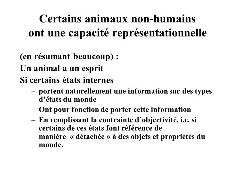 Certains animaux non-humains ont une capacité représentationnelle (en résumant beaucoup) : Un animal a un esprit Si certains états internes –portent n