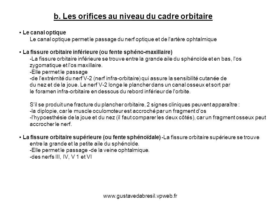 www.gustavedabresil.vpweb.fr b. Les orifices au niveau du cadre orbitaire Le canal optique Le canal optique permet le passage du nerf optique et de l'