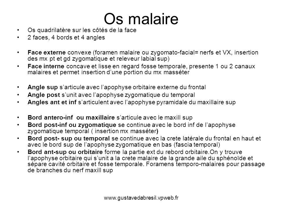 www.gustavedabresil.vpweb.fr Os malaire Os quadrilatère sur les côtés de la face 2 faces, 4 bords et 4 angles Face externe convexe (foramen malaire ou