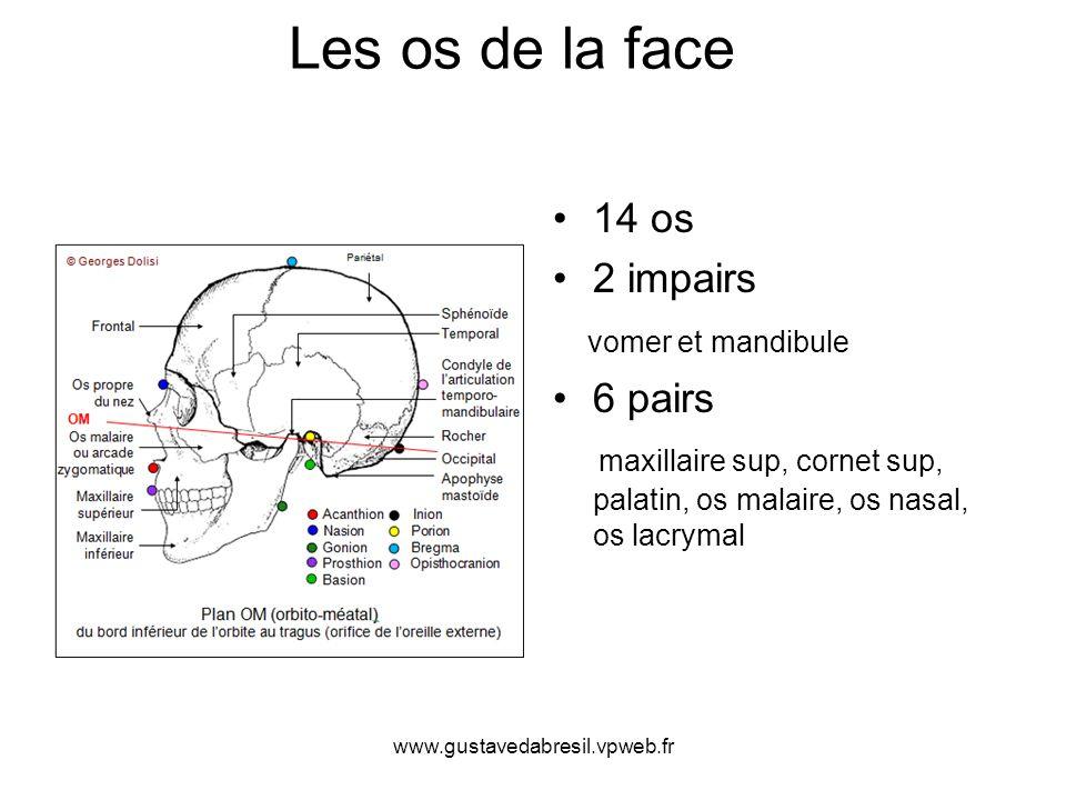 www.gustavedabresil.vpweb.fr Les os de la face 14 os 2 impairs vomer et mandibule 6 pairs maxillaire sup, cornet sup, palatin, os malaire, os nasal, o