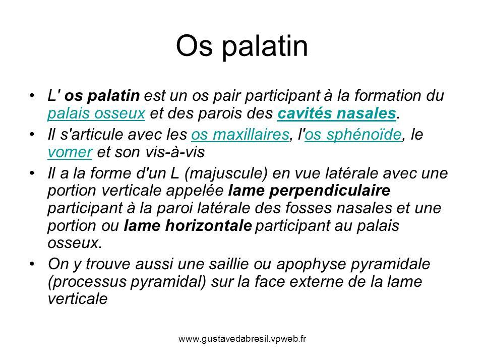 Os palatin L' os palatin est un os pair participant à la formation du palais osseux et des parois des cavités nasales. palais osseuxcavités nasales Il