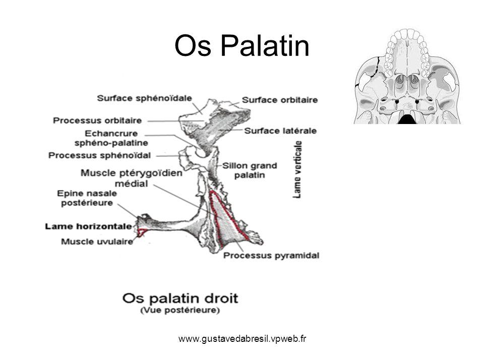 www.gustavedabresil.vpweb.fr Os Palatin