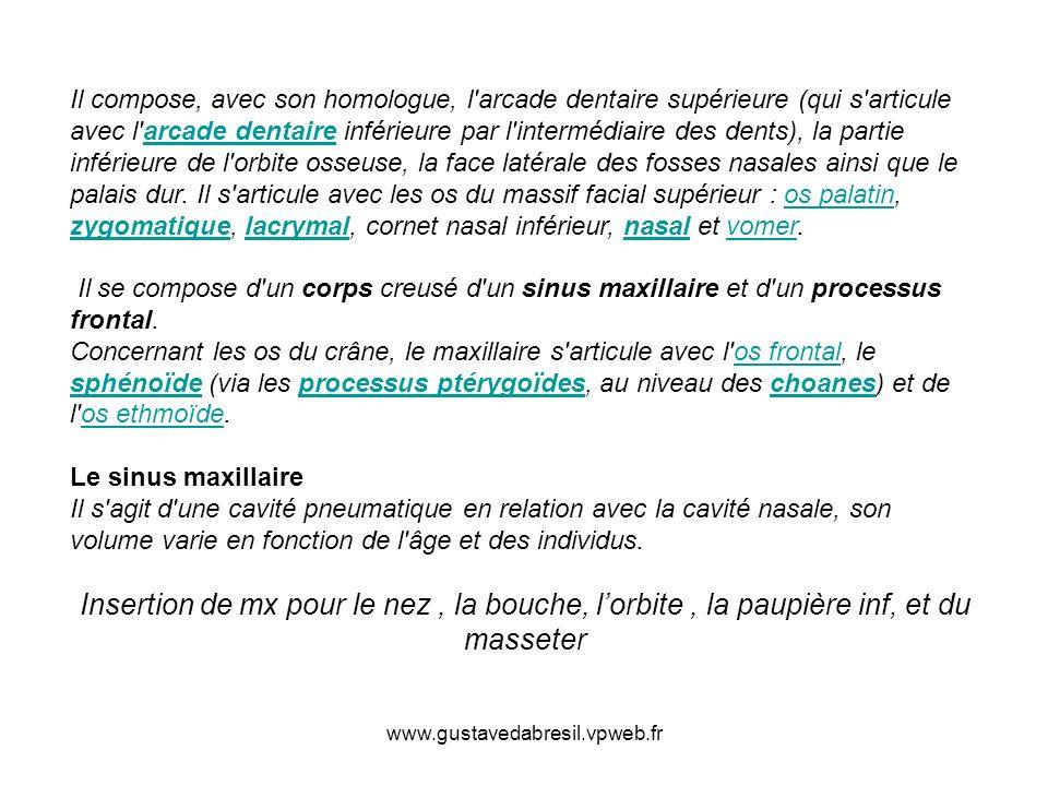www.gustavedabresil.vpweb.fr Il compose, avec son homologue, l'arcade dentaire supérieure (qui s'articule avec l'arcade dentaire inférieure par l'inte