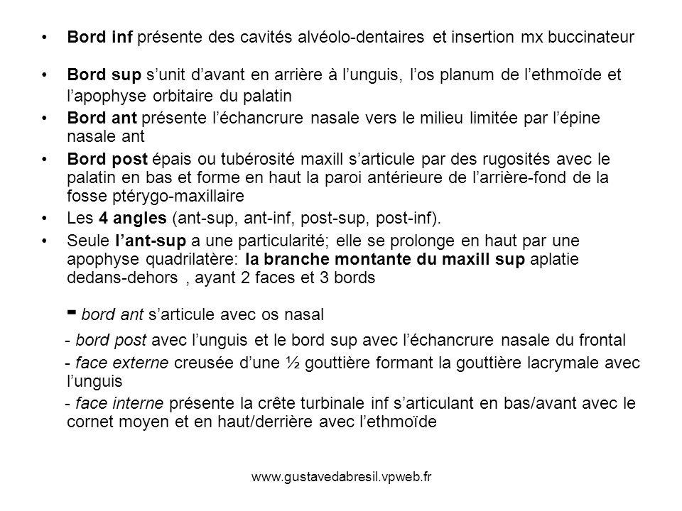 www.gustavedabresil.vpweb.fr Bord inf présente des cavités alvéolo-dentaires et insertion mx buccinateur Bord sup sunit davant en arrière à lunguis, l