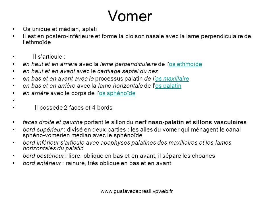 www.gustavedabresil.vpweb.fr Vomer Os unique et médian, aplati Il est en postéro-inférieure et forme la cloison nasale avec la lame perpendiculaire de