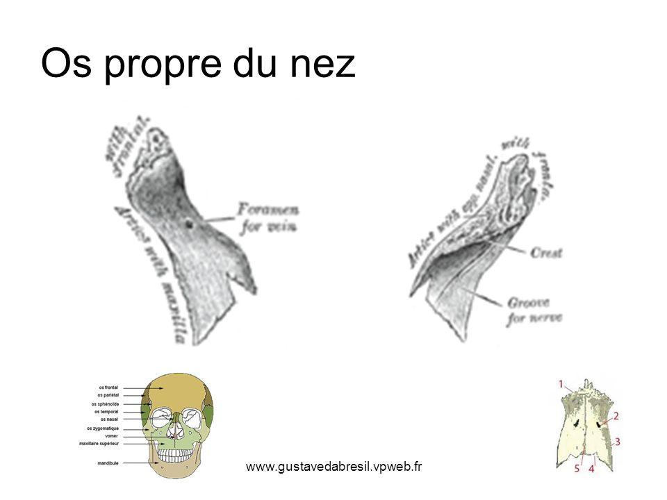 www.gustavedabresil.vpweb.fr Os propre du nez