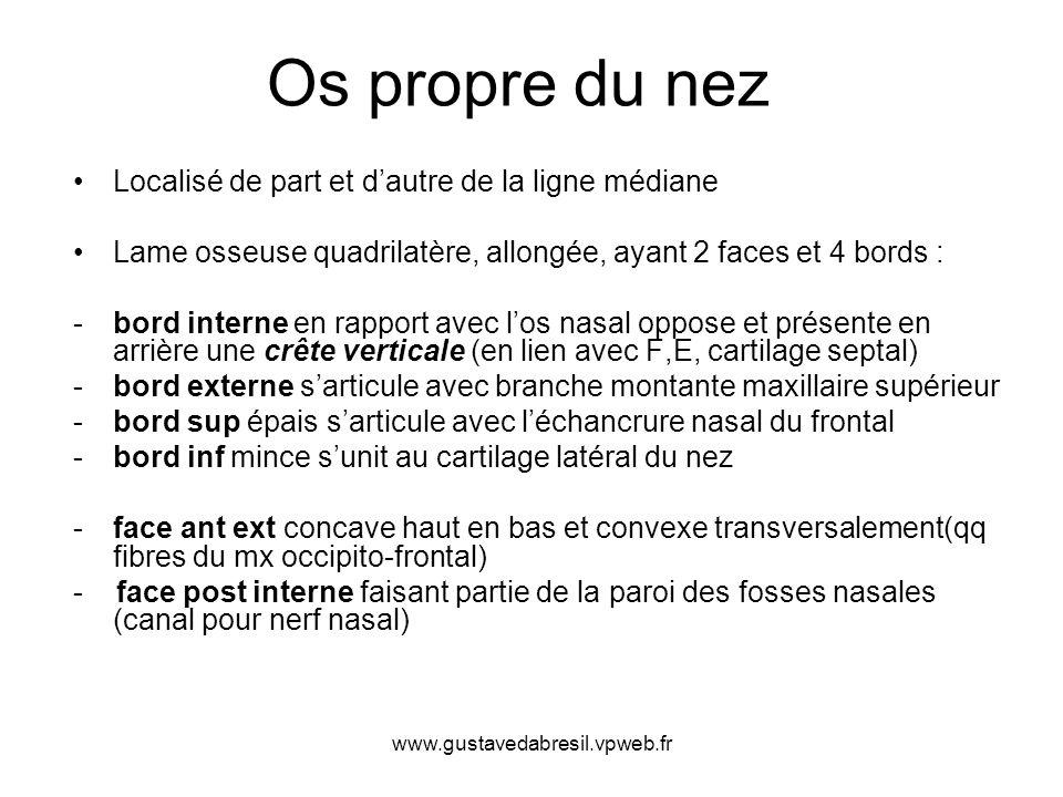 www.gustavedabresil.vpweb.fr Os propre du nez Localisé de part et dautre de la ligne médiane Lame osseuse quadrilatère, allongée, ayant 2 faces et 4 b