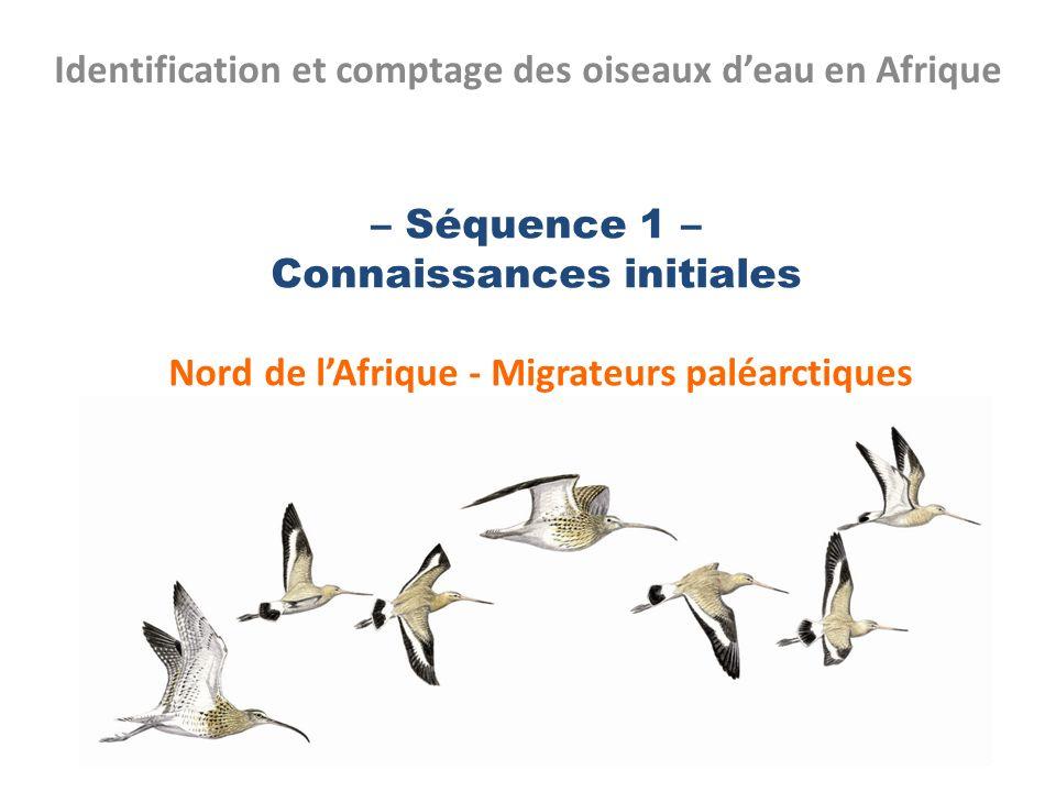 – Séquence 1 – Connaissances initiales Nord de lAfrique - Migrateurs paléarctiques Identification et comptage des oiseaux deau en Afrique 1