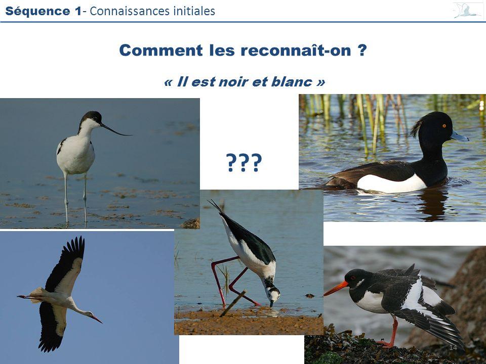 Séquence 1 - Connaissances initiales « Il est noir et blanc » Comment les reconnaît-on ? ??? 14