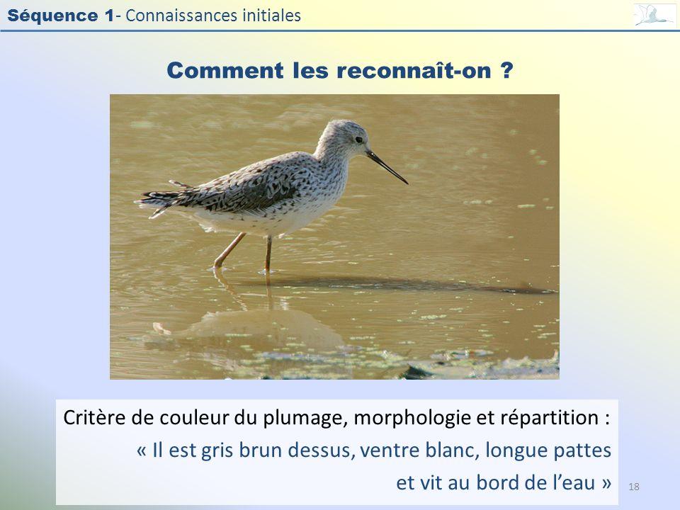 Séquence 1 - Connaissances initiales Comment les reconnaît-on ? Critère de couleur du plumage, morphologie et répartition : « Il est gris brun dessus,